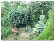 Можжевельник,  туя,  декоративные растения