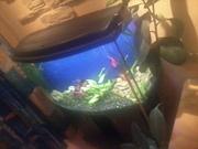 Продам аквариум Донецк 200 литров б/у