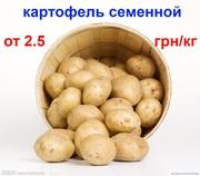 картофель посадочный семенной высоких репродукций