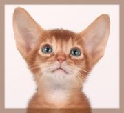 Рыжие котята ищут дом!