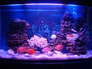 Профессиональное обслуживание и оформление аквариумов