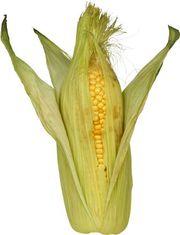 Cемена кукурузы производство Польша.