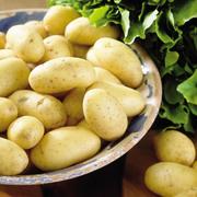 продам картофель семенной