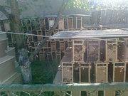 Пчелопакеты из Закарпатья в Донецке
