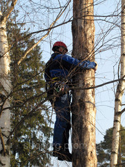 валка,  распиливание,  вывоз деревьев Донецкая область