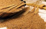 Организация закупает пшеницу. Объемы любые.