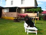 Отдых на уютной даче в деревне Студенок  и 2 ком.квартира в центре Св
