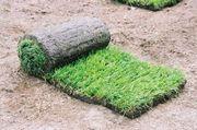 Натуральный рулонный газон от производитпеля