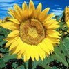 Средства защиты растений, посевной материал